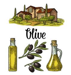 set olive bottle glass branch with leaves rural vector image vector image