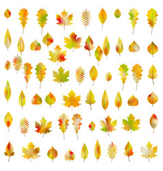 big set of 60 colorful autumn leaves eps 10 vector image