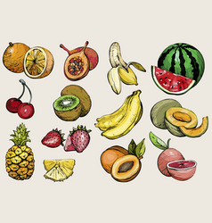 hand drawn healthy food exotic summer fruit vector image