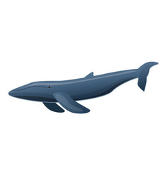 sei whale icon cartoon style vector image