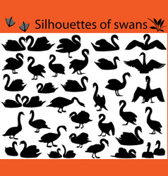 Silhouettes of swans vector