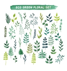 watercolor floral set Big green floral vector image