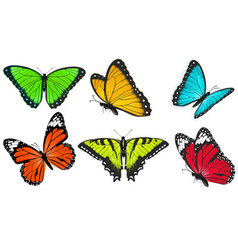 Set of realistic bright and colorful butterflies vector image vector image