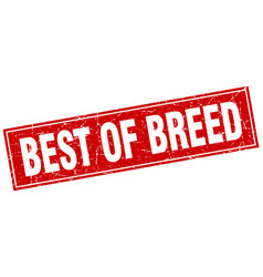 Best of breed square stamp vector