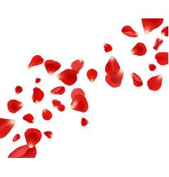 petal background flying rose petals wedding vector image