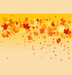 yellow maple leaves vector image