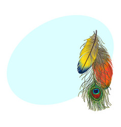 hand drawn set of colorful bird feathers parrots vector image vector image