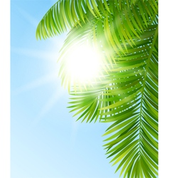 Branches of palm trees vector image vector image