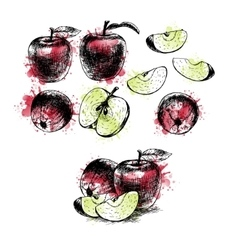 Watercolor Hand drawn set of apples sketch vector image