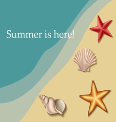 Sea text frame with shells and sea stars vector image