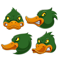 Set collection angry duck mascot vector
