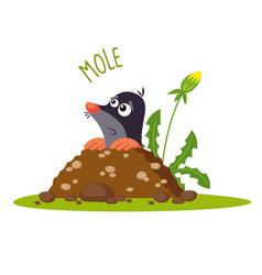 mole vector image