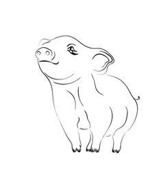 2019 zodiac pig new year brings prosperity and vector image