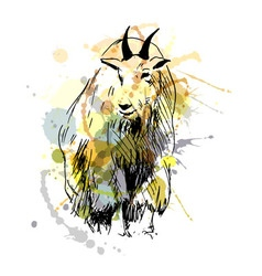colored hand drawing a mountain goat vector image