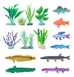 different-sized and colored fish and algae poster vector image
