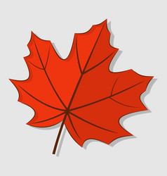 maple autumn leaf isolated on a white background vector image