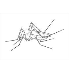 Mosquito sketch vector