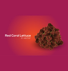 Red coral lettuce in format vector