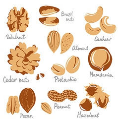 stylized nuts vector image
