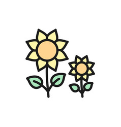sunflower flowers flat color line icon vector image