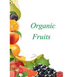 various fruits on white background vector image