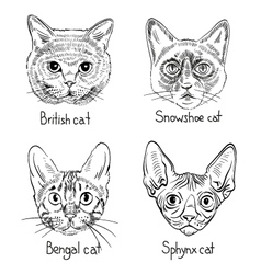 Drawing cats icons vector