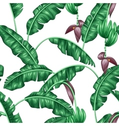 Seamless pattern with banana leaves Decorative vector image vector image