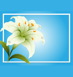 Border template with white lily vector