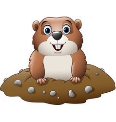 cartoon funny groundhog vector image