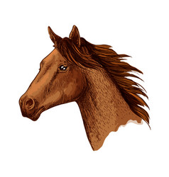 Horse trotter head sketch symbol vector