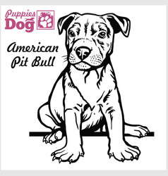 American pit bull puppy sitting drawing hand vector