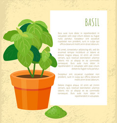basil poster and plant in pot vector image