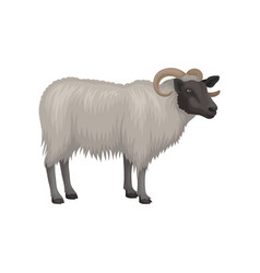 flat icon of male sheep ram with black vector image