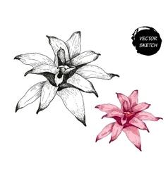 Flowers in Sketch vector