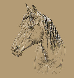 Horse portrait-20 on brown background vector