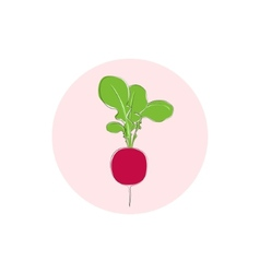 Icon radish vegetable with leaves vector
