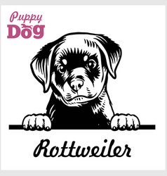 puppy rotweiller - peeking dogs - breed face head vector image