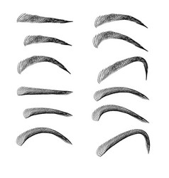 set of outline eyebrows in different shapes and vector image