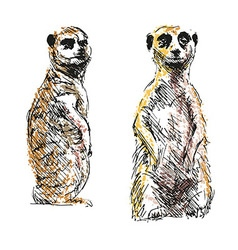 Colored hand drawing meerkats vector image