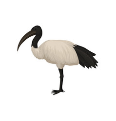 Detailed flat icon of ibis sacred bird of vector