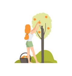 Girl picking apples in the garden farmer vector