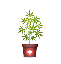 Medical marijuana or cannabis in pot green herbs vector