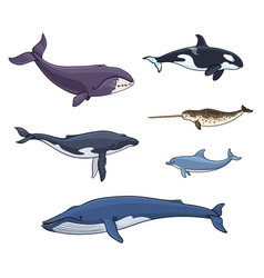 Sea mammals cetacea vector