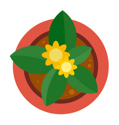 Top view plant pot icon flat style vector