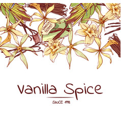 Vanilla spice poster for advertising company vector
