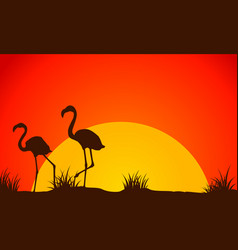 beauty landscape flamingo at sunset silhouette vector image vector image