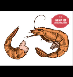 collection of hand drawn colored shrimp vector image