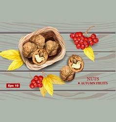 Greek walnuts realistic wooden background vector