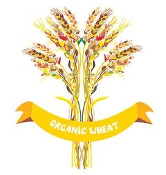Label design for organic wheat vector image