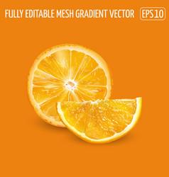 Orange fruit slices on an background vector